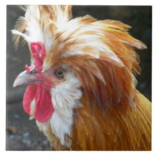Polish Chicken Photo Tile