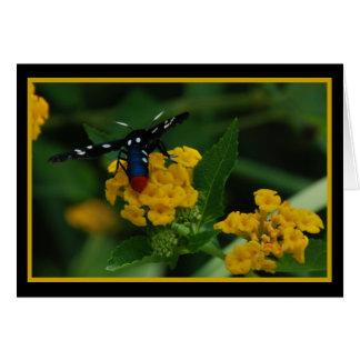 Polkadot Wasp Moth 270 Card
