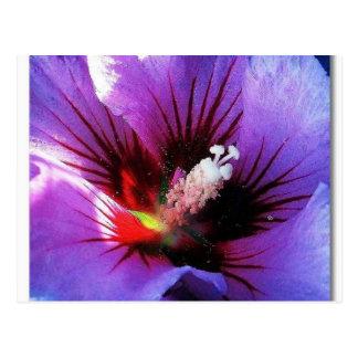 pollen revisited postcard