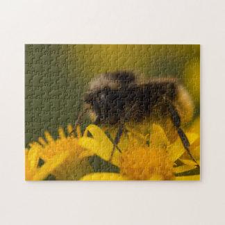 Pollinating Bumblebee Puzzle