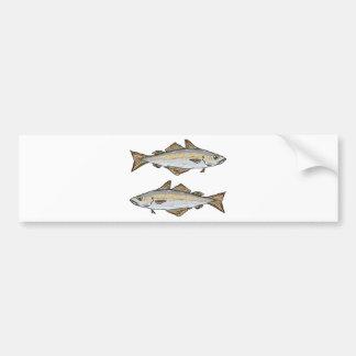 Pollock Fish Sketch Bumper Sticker