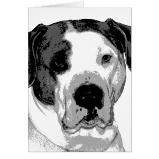Polo the Pit Bull Card