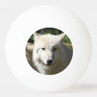 Poly Animals - Wolf Ping Pong Ball