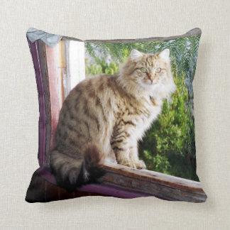 "Polyester Cushion 16"" x 16"" - Shirl in Window"