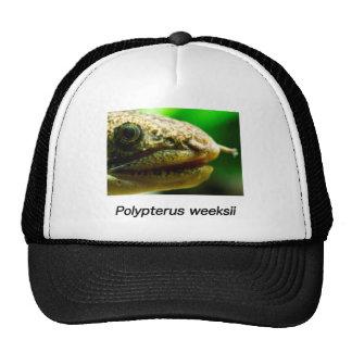 Polypterus weeksii trucker hat