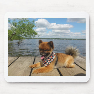 pom pup on dock mouse pad