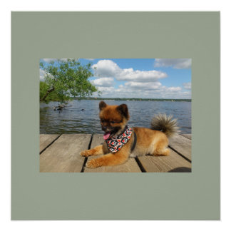 pom pup on dock poster