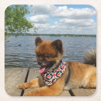 pom pup on dock square paper coaster
