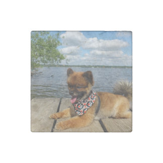 pom pup on dock stone magnets