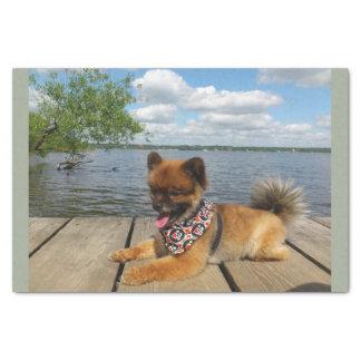 pom pup on dock tissue paper