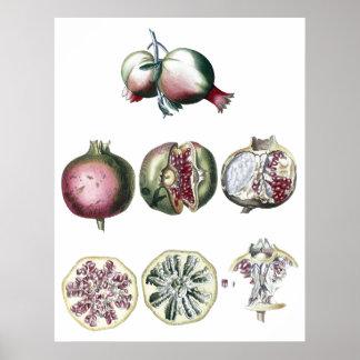 Pomegranate-botanical print