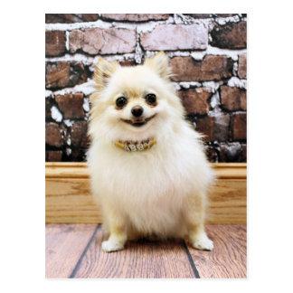 Pomeranian - Abby Vanity Collar Postcard