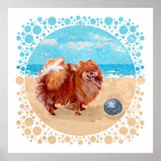 Pomeranian at the Seashore Posters