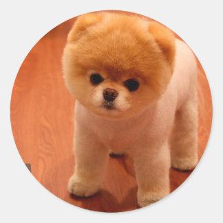 Pomeranian-cute puppies-spitz-pom dog-pom puppies classic round sticker