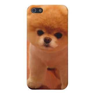 Pomeranian-cute puppies-spitz-pom dog-pom puppies iPhone 5/5S covers