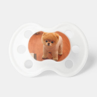 Pomeranian-cute puppies-spitz-pom dog-pom puppies pacifier