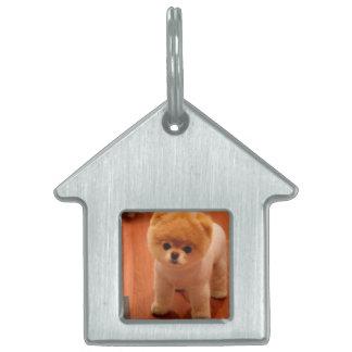 Pomeranian-cute puppies-spitz-pom dog-pom puppies pet ID tag