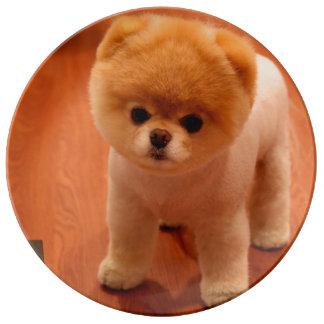 Pomeranian-cute puppies-spitz-pom dog-pom puppies plate
