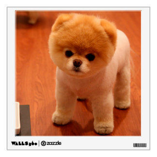 Pomeranian-cute puppies-spitz-pom dog-pom puppies wall decal