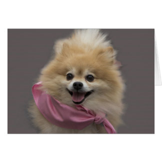 Pomeranian Dog Birthday Card by Focus for a Cause