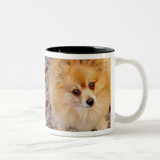 Pomeranian Dog Coffee Mug