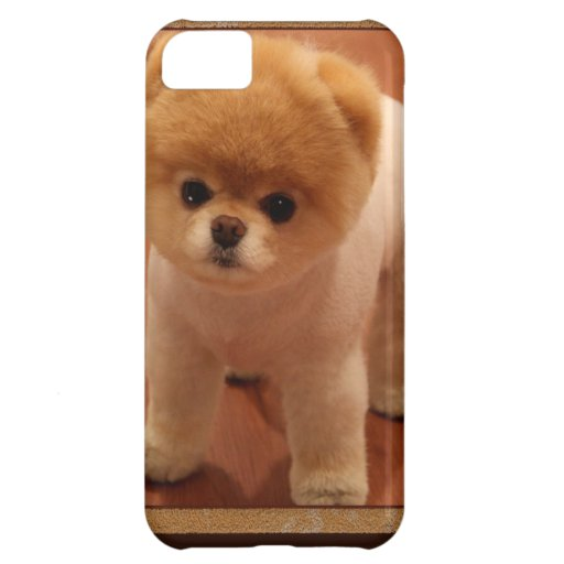 Pomeranian Dog Pet Puppy Small Adorable baby Case For iPhone 5C