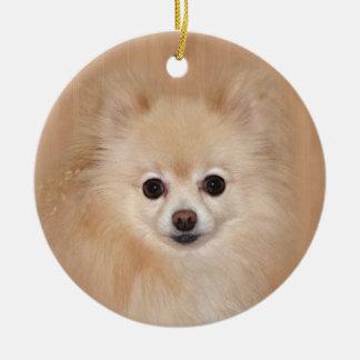 Pomeranian face ceramic ornament