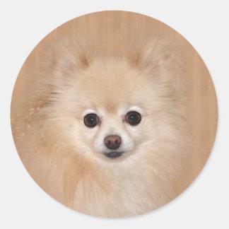 Pomeranian face classic round sticker