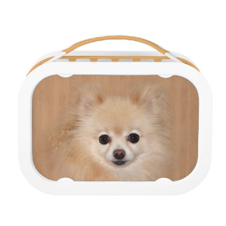 Pomeranian face lunch box
