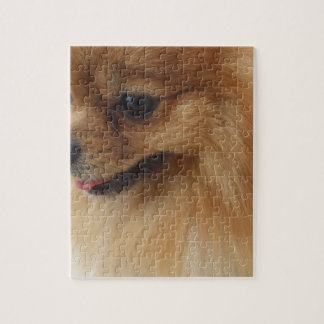 Pomeranian Lover Jigsaw Puzzle