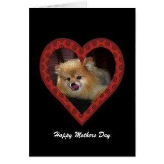 Pomeranian: Mothers Day Card