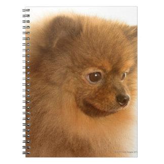 Pomeranian Notebooks