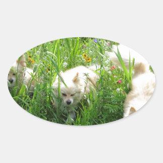 Pomeranian Oval Sticker