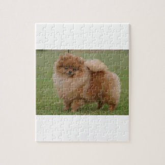 Pomeranian Perfection, Jigsaw Puzzle