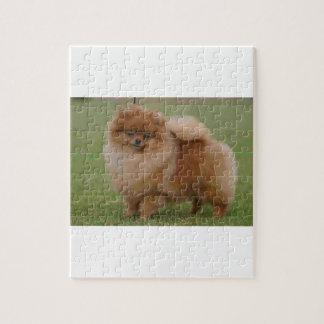 Pomeranian Perfection, Jigsaw Puzzle