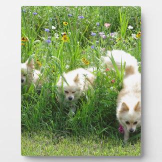Pomeranian Plaque