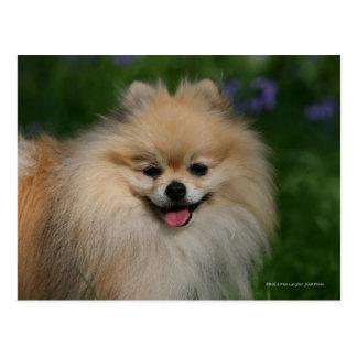 Pomeranian Smiling Postcard