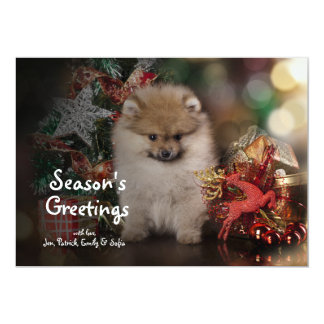 Pomeranian Spitz, Christmas Puppy Card