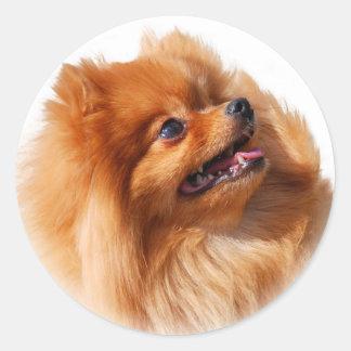 Pomeranian Spitz Classic Round Sticker