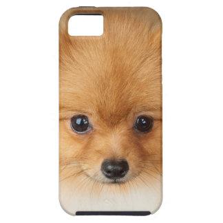 Pomeranian spitz iPhone 5 case