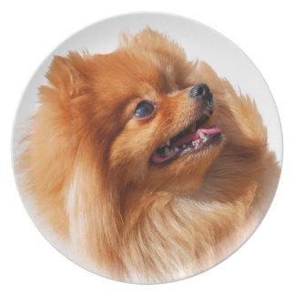 Pomeranian Spitz Plate