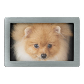 Pomeranian spitz rectangular belt buckle