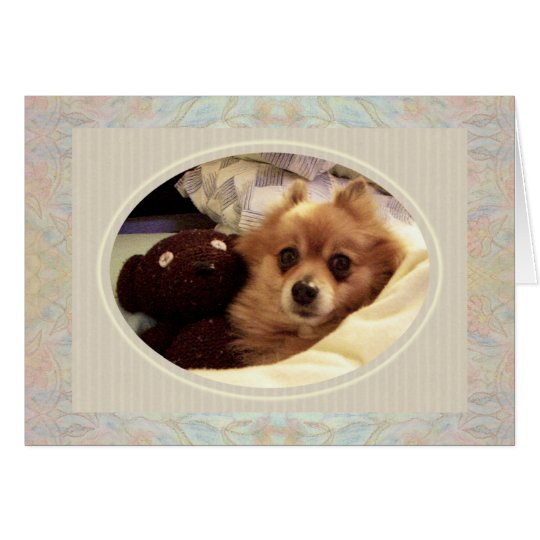 Pomeranian & Teddy bear Get Well Card