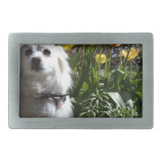 Pomeranian Tulips Belt Buckle