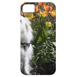Pomeranian Tulips iPhone 5 Covers