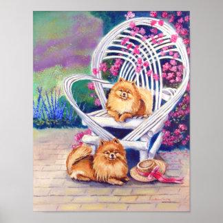 Pomeranian Wall Print