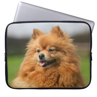 Pomeranian Watching Laptop Sleeve
