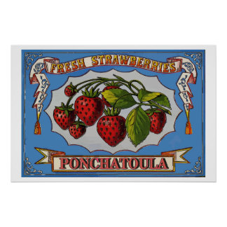 Ponchatoula Strawberries, LA Poster