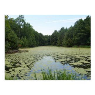 Pond Postcard