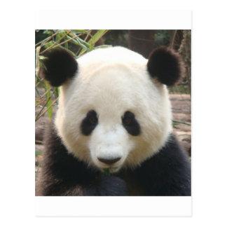 Pondering Panda Postcard